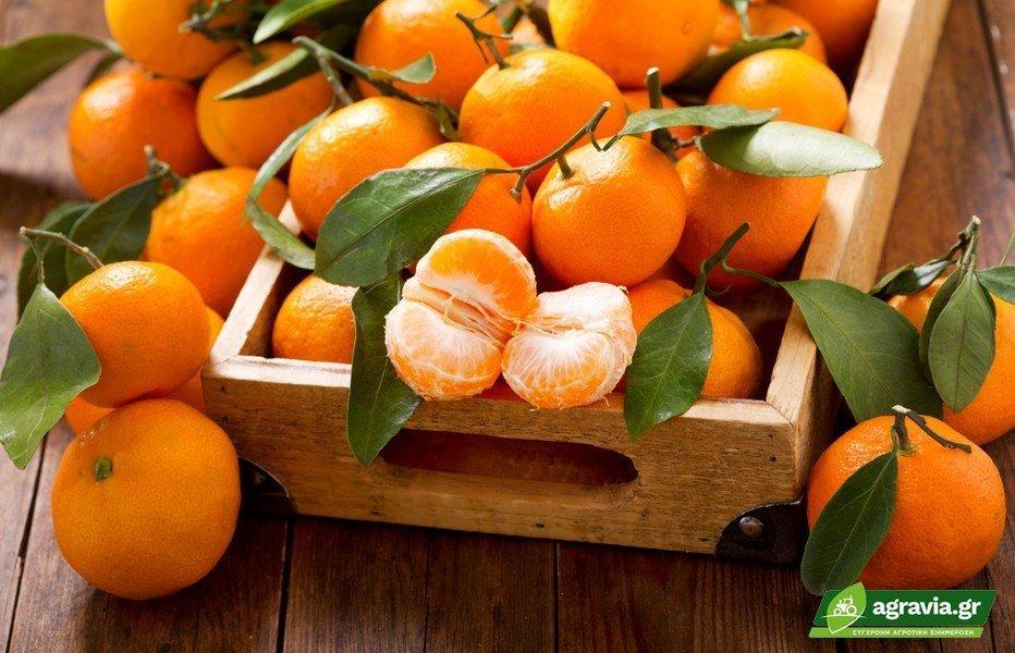 Μανταρίνια Τα φρούτα Της Μακροζωίας