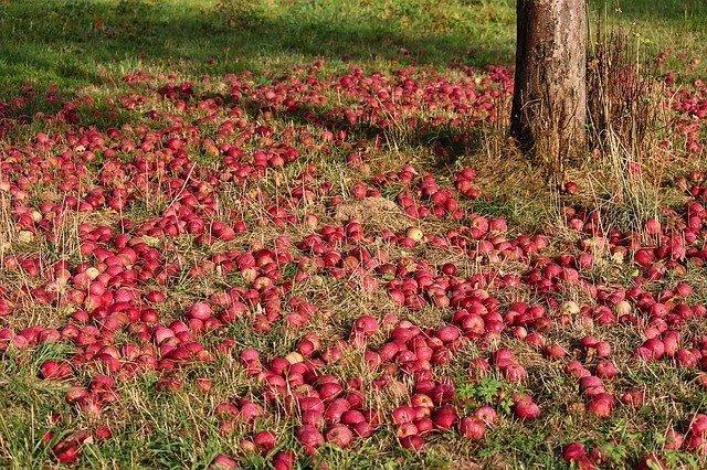 Παραγωγούς Μήλου