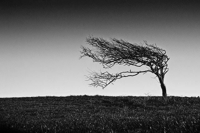 Άνεμος