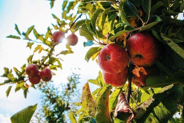 Γεωργική Προειδοποίηση Παραγωγών Μήλου