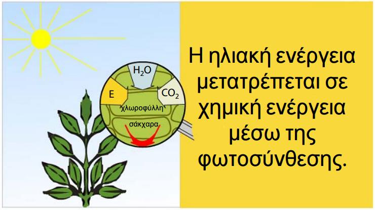 Τα φυτά δεσμεύουν την ηλιακή ενέργεια