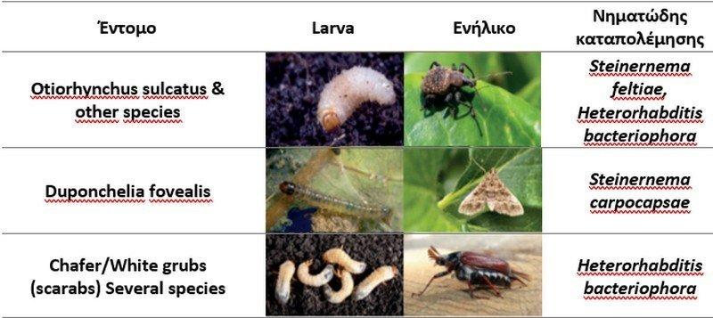 Έντομα μαλακόσαρκων φρούτων
