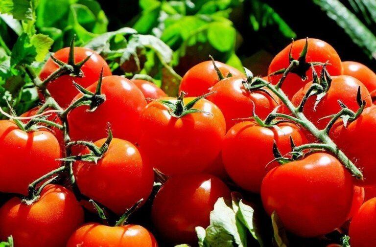 Γεωργική Προειδοποίηση Παραγωγών Βιομηχανικής Τομάτας Κ. Ελλάδος