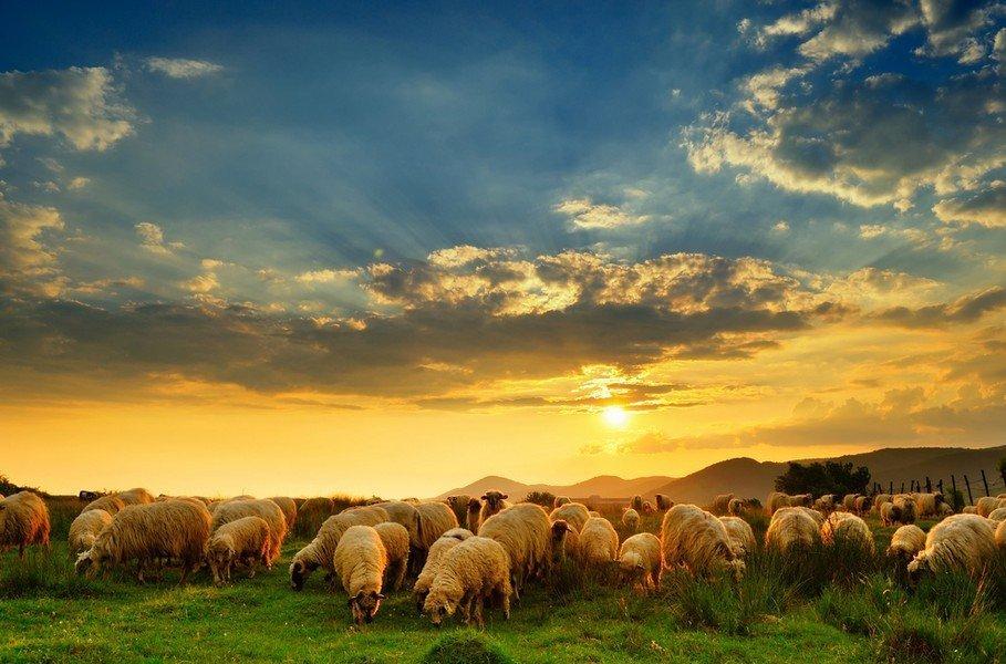 Ενίσχυση Αιγοπροβατοτρόφων
