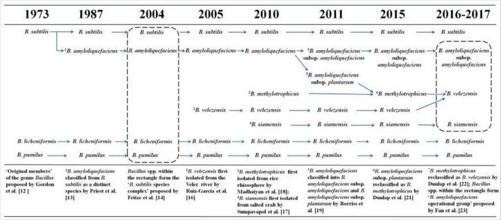 Ιστορική Προέλευση Bacillus