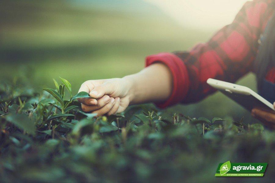 Πρόγραμμα Νέων Αγροτών
