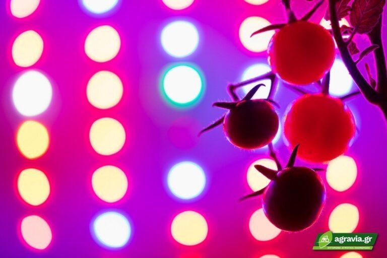 Βελτίωση Μετασυλλεκτικών Ιδιοτήτων Τομάτας με Χρήση Φωτισμού LED