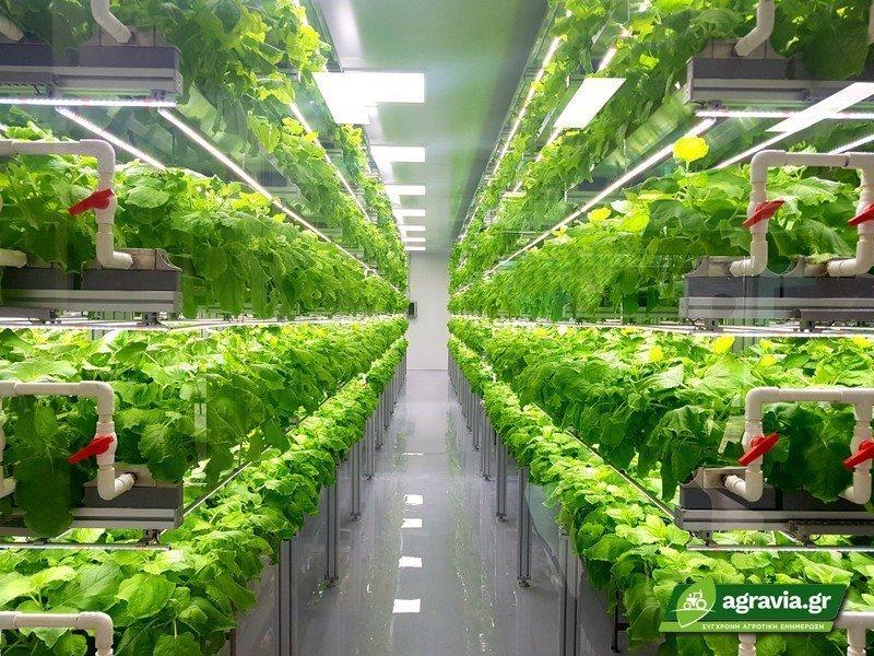 Κάθετη Καλλιέργεια