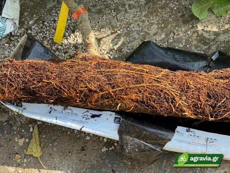 Υδροπονική Καλλιέργεια σε Υπόστρωμα Κοκοφοίνικα