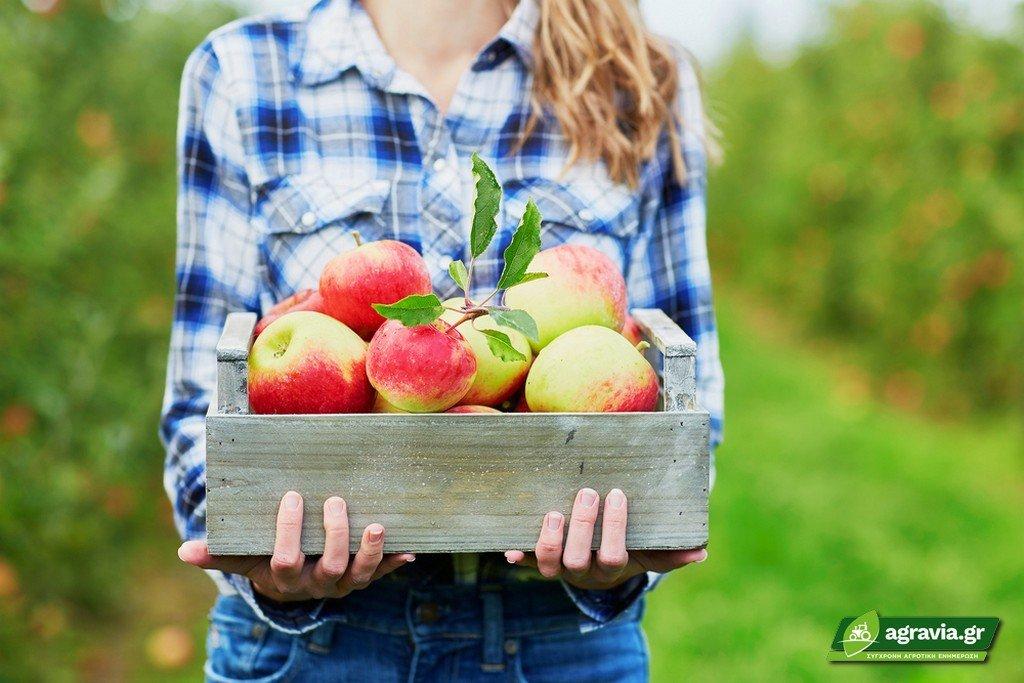 Η Διατροφική Αξία του Μήλου