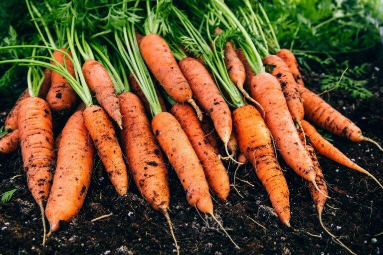 10 Μυστικά για τη Φύτευση και Καλλιέργεια Καρότου