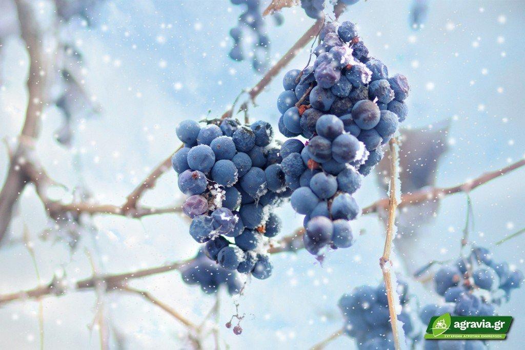 Κρασιά του Πάγου