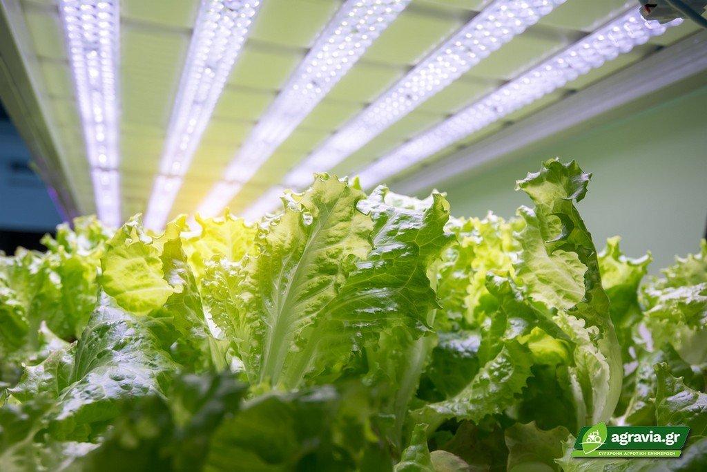 Συνολικός Φωτισμός σε Καλλιέργειες Θερμοκηπίου