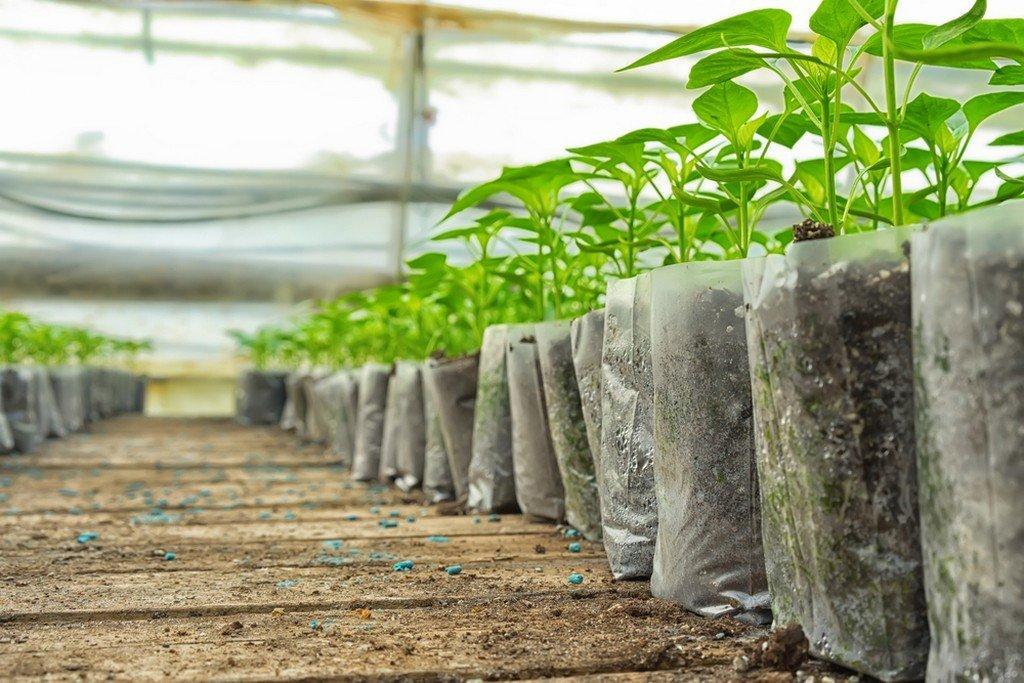 Ελλείψεις Νέων Φυτών