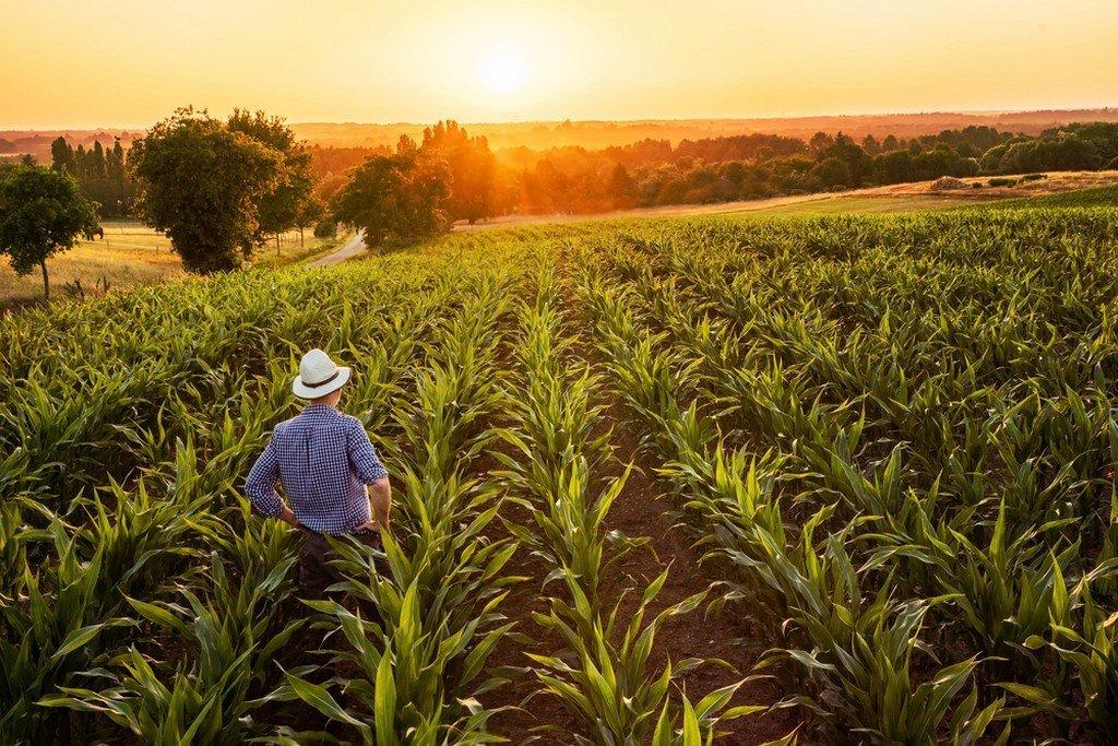 Πριμ Νέων Αγροτών